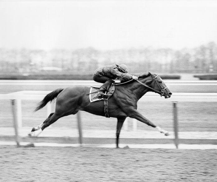 wallpaper horse sky belmont - photo #7